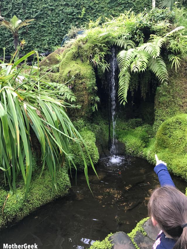 Tatton Park Gardens - Rainforest