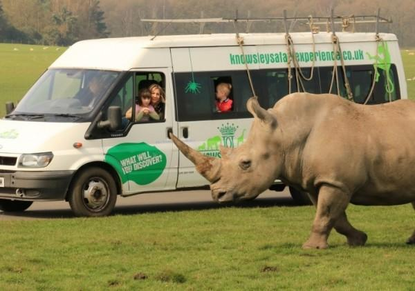 Is Knowsley Safari Park Autism Friendly? stock photo from their website of the baboon bus