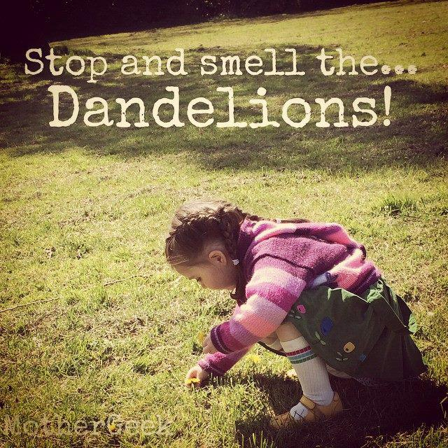 stop and smell the dandelions... Sleep Deprived Sunday